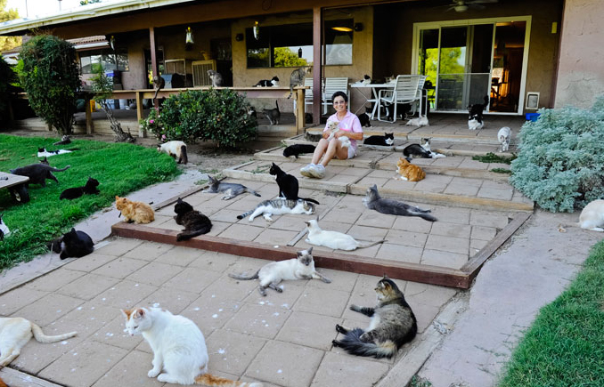 cat sanctuary on the kings