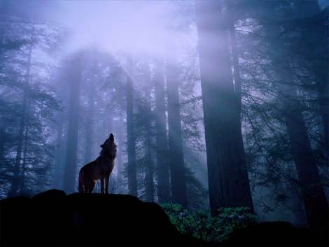 wolf-night-howl-first-people